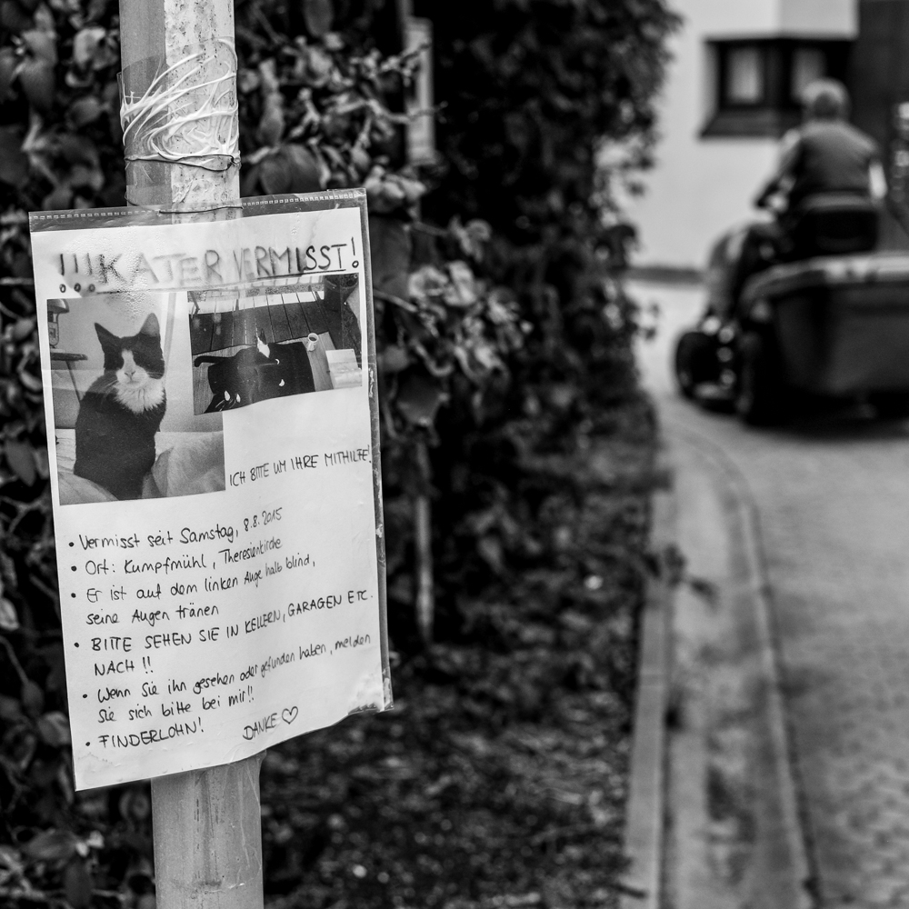 wpid400-150904_GesichterRegensburgs__MKR5914-Bearbeitet.jpg